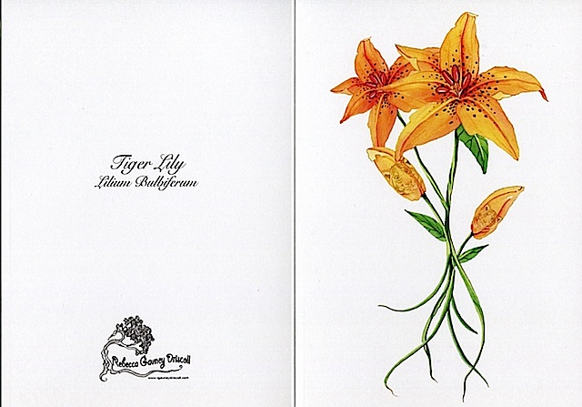 Tiger lily low res961